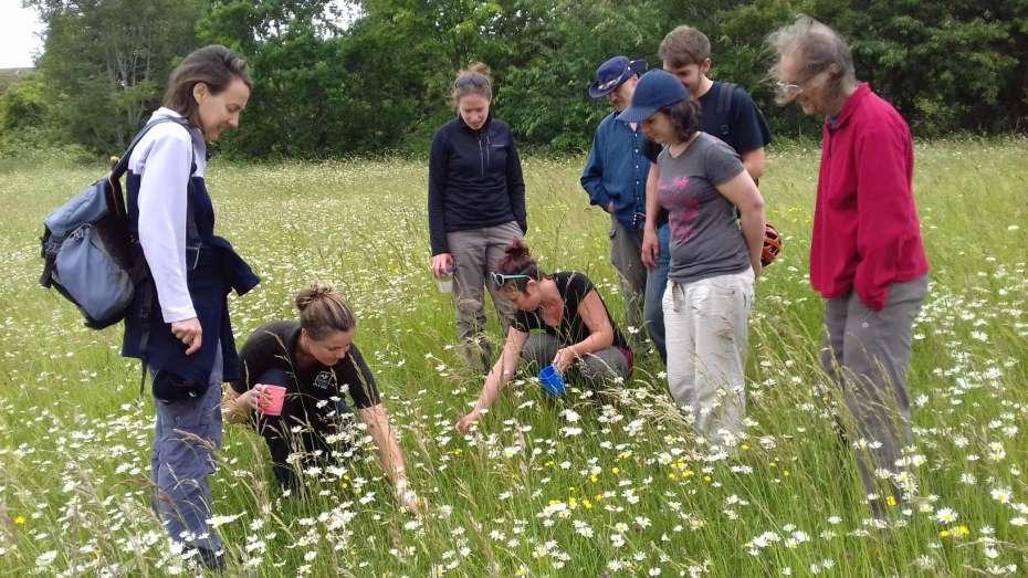group wild flower planting