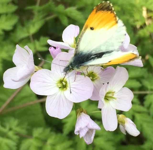 butterfly on flower macro emma