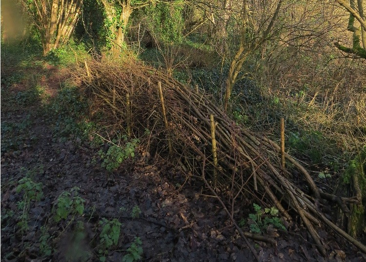 Dead hedge in Manor Woods Valley